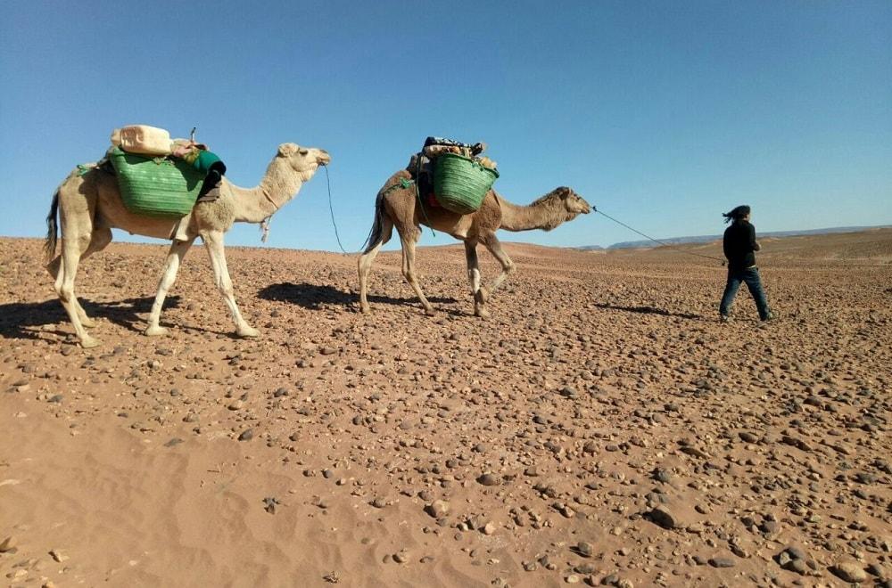 Morocco camel trekking tour price