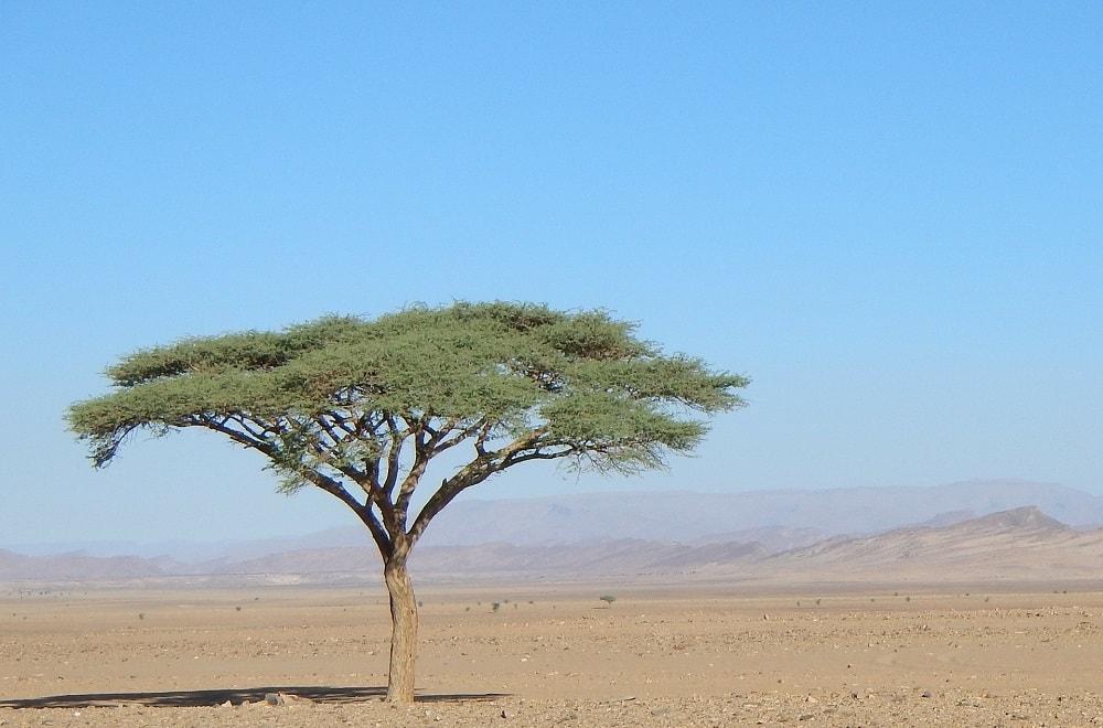 Yoga Morocco Sahara