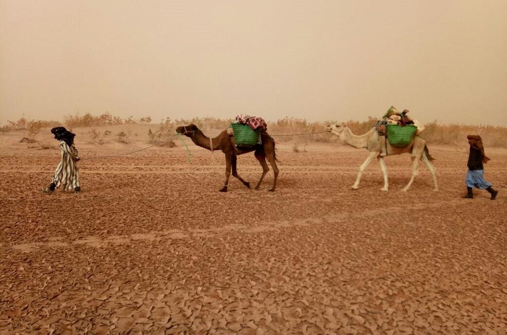 morocco camel trekking 3 days