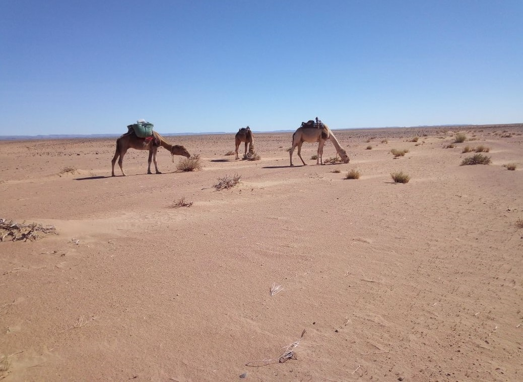 Marrakech desert tours Morocco