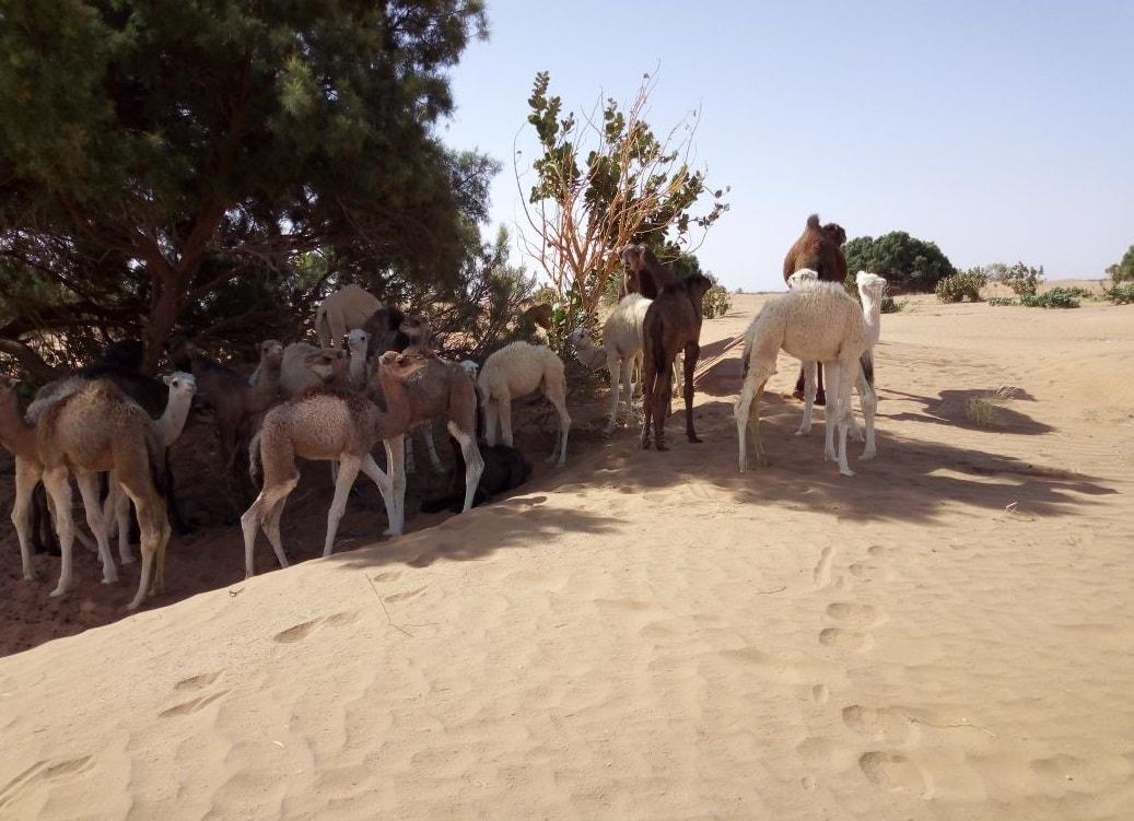 Morocco desert trip from Marrakech