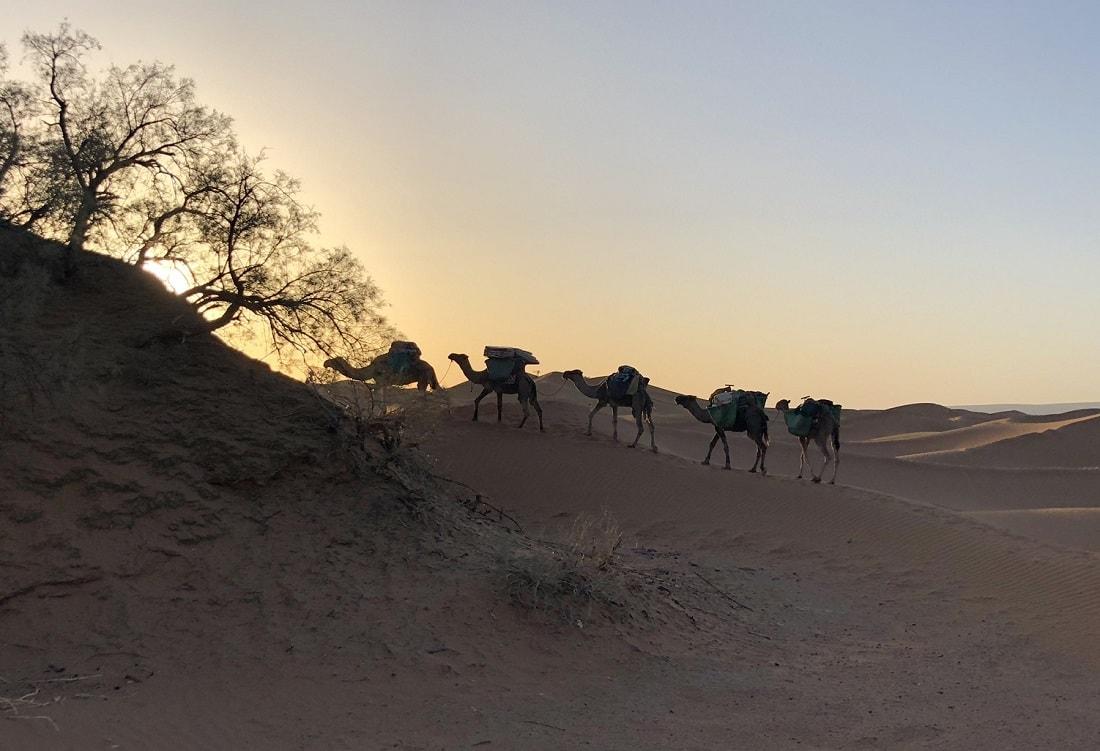 Sahara camel trekking tour